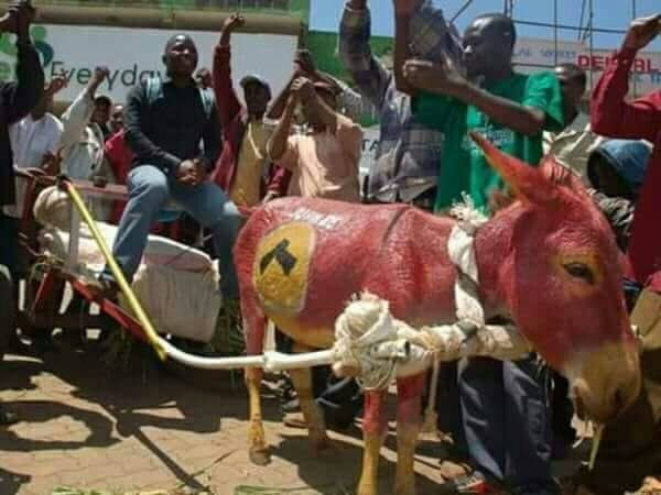 Charity Intervenes After Owner Paints His Donkey in Support of Kenyan  President