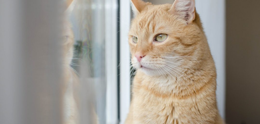 Is Your Cat the UK's Most Marvellous Moggy?