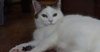 Rescue Cat with Feline Asthma Finds New Home