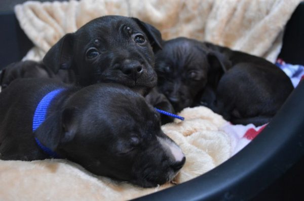 Dumped in a Box and Left to Die, Puppies Get a Second Chance Thanks to Good Samaritan