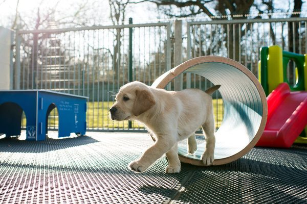 Meet Banjo, a Guide Dog Puppy Being Supported by Toyota GB
