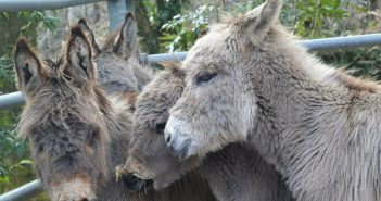 Donkey Foals Find Their Sanctuary After Being Taken into Care