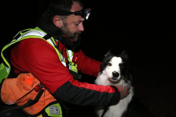 Border Collie Goes From Rescue Dog to Rescuer