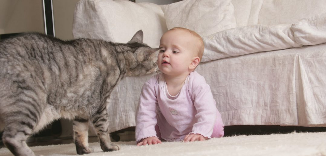Having a Family Doesn't Have to Mean Goodbye Pets