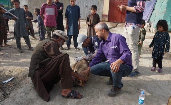 Mayhew Afghanistan on track to eradicate rabies in Kabul