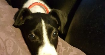 Terrified Puppy Finds Her Happily Ever After in New Loving Home