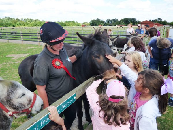 Fun, Free Summer Fun for Aspiring Young Horse Carers of the Future