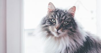 Top Tips to Keep Your Cat Safe This Winter