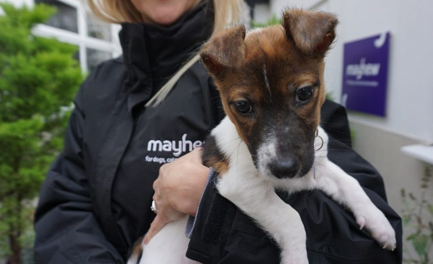 Ban of Third Party Sales of Puppies and Kittens Announced