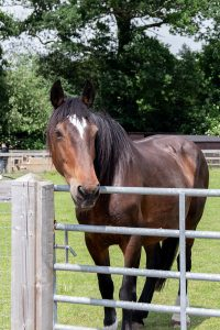 Rescued Mare's Life is Transformed at Horse Sanctuary