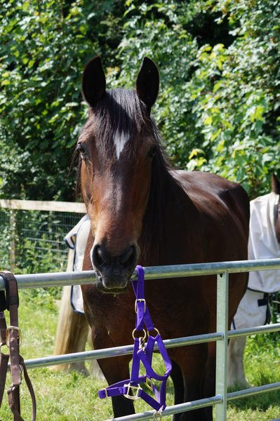 Redwings has pledged Carmen a safe, forever home.