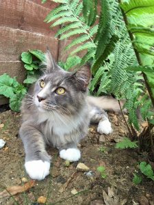 Vets Help Young Cat Beat Rare Spinal Condition