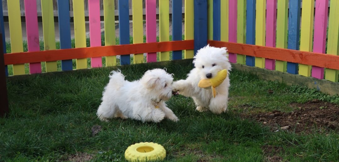 Puppies Have New Puppy Palace to Enjoy Until They Find Their Forever Home
