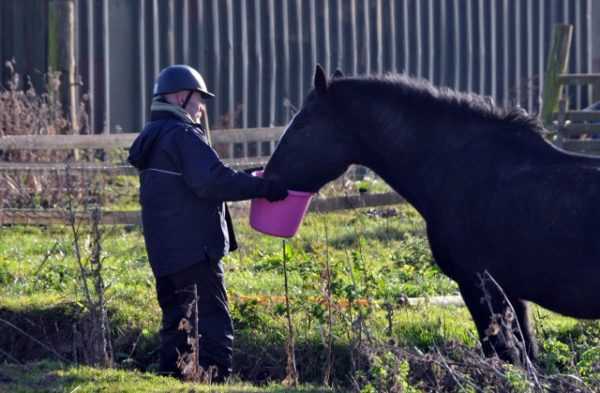 Shire Foal Marks One Year Since Major Rescue