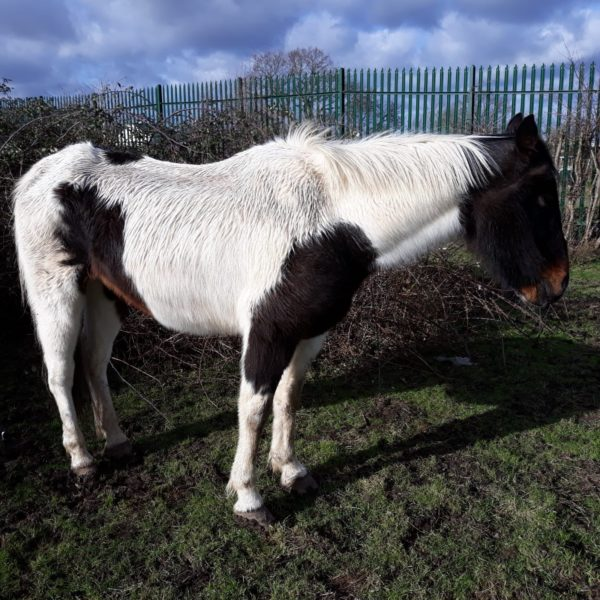 Horse Saved After Bramble Becomes Lodged in its Mouth