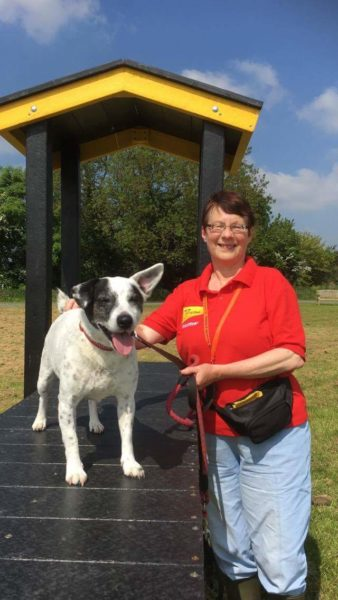 Dogged devotion - volunteers celebrate two decades of helping rescue dogs find forever homes