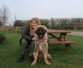 Dogs Trust helps pup fill the paws of 'lifesaver' canine companion
