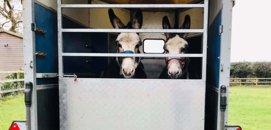 Animal charity steps in to rescue donkeys with overgrown hooves