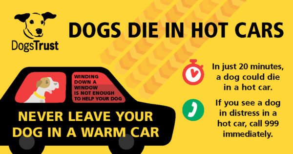 Hot tips to keep your canine companion safe in the sun