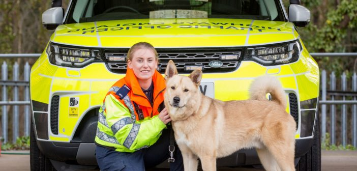 Dog hit by car on M1 proves to be 'paw-fect' pupil at dog school