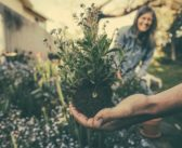 10,000 Londoners to get planting with free #GiveItAGrow kits