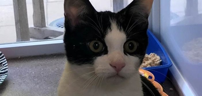 Cat falls 30ft from a second floor window – and survives to tell the 'tail'!
