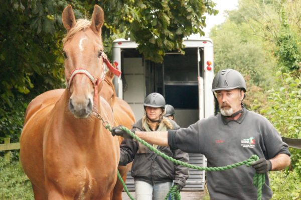 Redwings ambulance drivers mark over 50 years rescuing horses