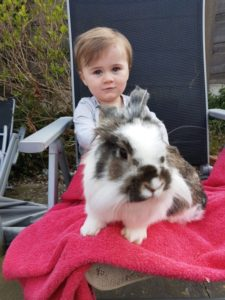 This two-year-old girl has the 'magic touch' with homeless rabbits