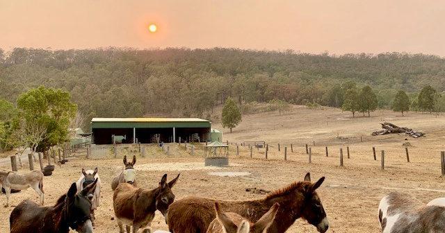 UK Charity helps The Good Samaritan Donkey Sanctuary  feed donkeys during the Australian summer period