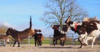 Photo Captures Martha the Mule Jumping for Joy!