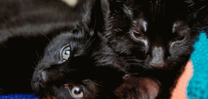 Tiny stray kitten saves his sick brother's life