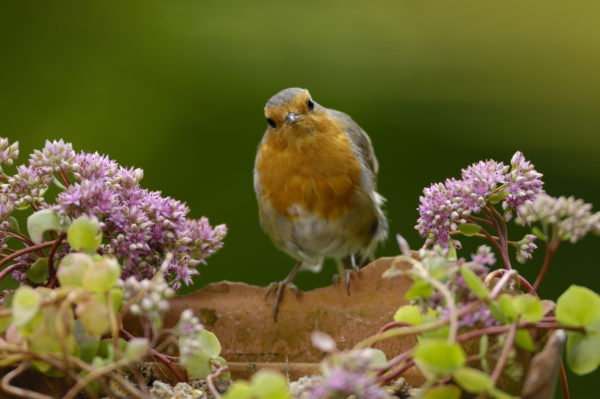 Wake up to the symphony of the Dawn Chorus this weekend!