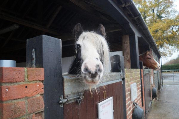 Rescued Pony Leaves Hospital After 5 Years