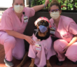 """Therapy """"dogtor"""" and owner deliver thousands of care packages to medical professionals during pandemic"""
