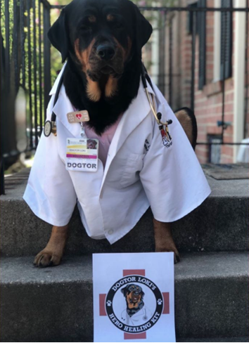 "Therapy ""dogtor"" and owner deliver thousands of care packages to medical professionals during pandemic"