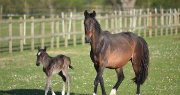 Horse Sanctuary Experiences Lockdown Baby Boom