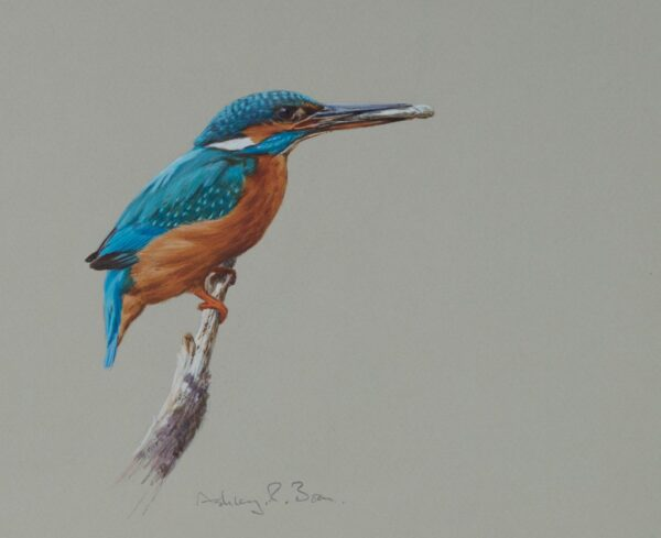 Online Wildlife Art Gallery Supports Artists and Conservation Efforts