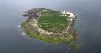 Record-breaking 130 pairs of breeding roseate terns recorded this year on Coquet Island