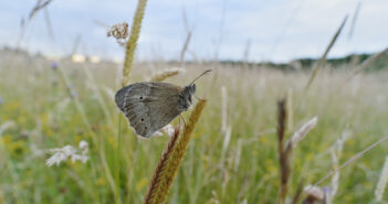 Soaring invertebrate life at Yorkshire biodiversity hotspot bucks global trends
