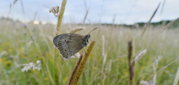 Soaring invertebrate life at Yorkshire biodiversity hotspot bucks global trends