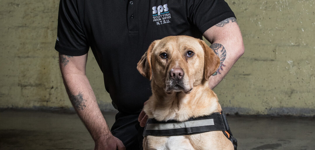 Rescue Dogs Sniff Out A New Career With Prison Service