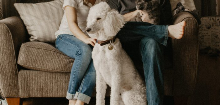 Yours Furever: Share Your Love for Your Pets this Valentine's Day