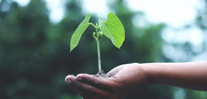 Reforestation Projects Across the UK and the World Helping to Combat Climate Change
