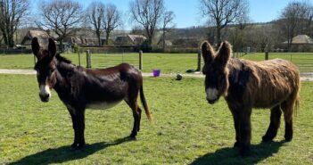 Gentle giant donkey finds new friend for life