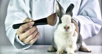 Breakthrough for Cruelty-Free Cosmetics in China