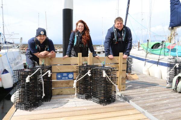 Restoration Efforts Underway Placing 'Ocean Superheroes' Under Marina Pontoonsin Scotland