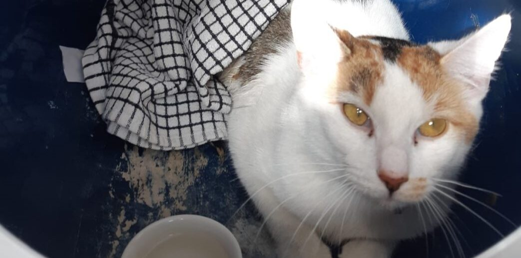 Dumped cat sees fate intervene when her finders fall in love with her!
