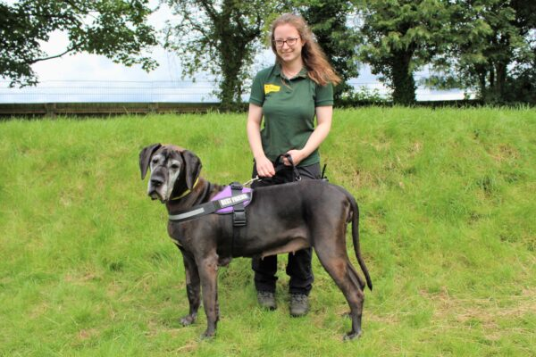 Could You Give a Dog a Loving Short-Term Home?