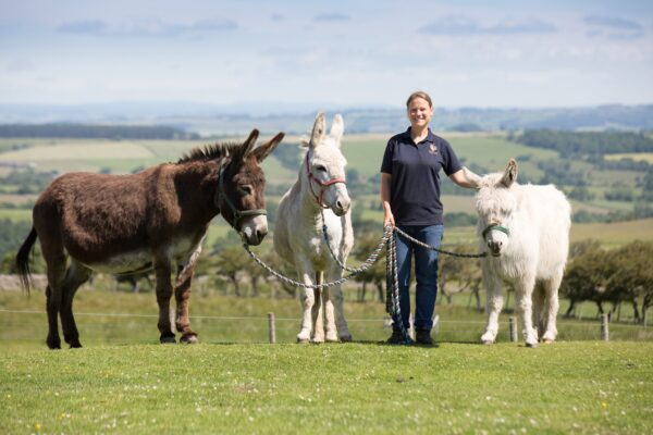 Severely Neglected Donkeys Now Happily Moving Around Pain-Free