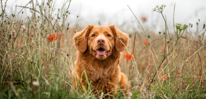 Dog Lovers Needed to Take Part in 'Land-bark' Survey